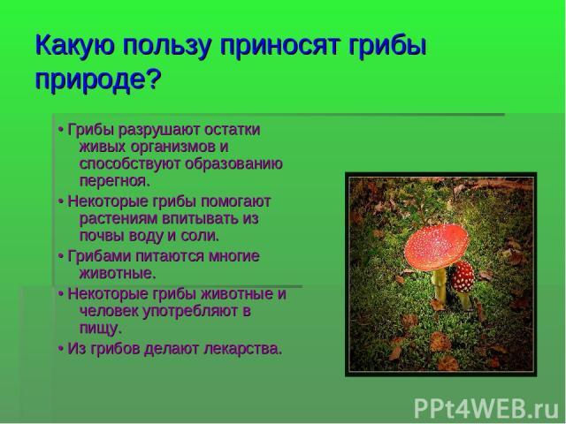 Какую пользу приносят грибы природе? • Грибы разрушают остатки живых организмов и способствуют образованию перегноя. • Некоторые грибы помогают растениям впитывать из почвы воду и соли. • Грибами питаются многие животные. • Некоторые грибы животные …