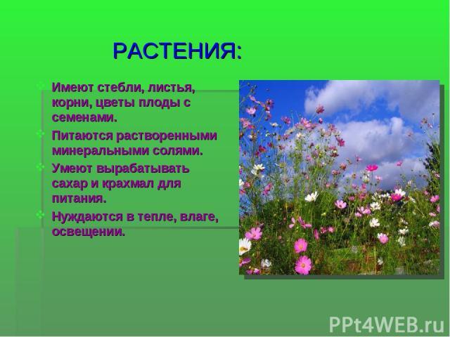 РАСТЕНИЯ: Имеют стебли, листья, корни, цветы плоды с семенами. Питаются растворенными минеральными солями. Умеют вырабатывать сахар и крахмал для питания. Нуждаются в тепле, влаге, освещении.