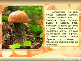 Подосиновик. Этот гриб иногда называют краснюк, осиновик, красноголовик. Славитс