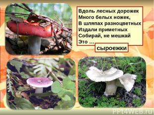 Вдоль лесных дорожек Много белых ножек, В шляпах разноцветных Издали приметных С