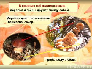 В природе всё взаимосвязано. Деревья и грибы дружат между собой. Деревья дают пи