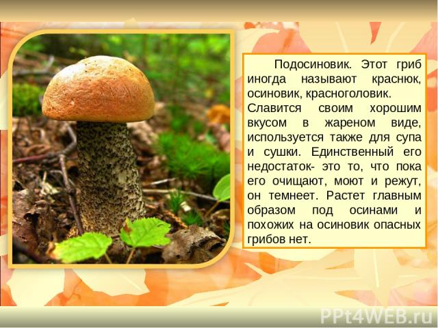 Подосиновик. Этот гриб иногда называют краснюк, осиновик, красноголовик. Славится своим хорошим вкусом в жареном виде, используется также для супа и сушки. Единственный его недостаток- это то, что пока его очищают, моют и режут, он темнеет. Растет г…