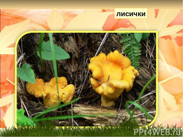 Очень дружные сестрички Ходят в рыженьких беретах, Осень в лес приносят летом Золотистые…. лисички
