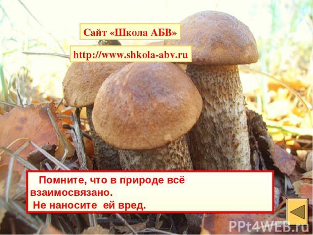 Помните, что в природе всё взаимосвязано. Не наносите ей вред. Сайт «Школа АБВ» http://www.shkola-abv.ru