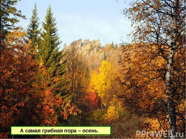 А самая грибная пора – осень.