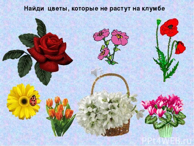 Найди цветы, которые не растут на клумбе