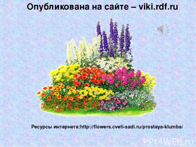 Ресурсы интернета:http://flowers.cveti-sadi.ru/prostaya-klumba/ Опубликована на сайте – viki.rdf.ru