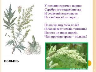 полынь У полыни скромен наряд: Серебристо-седые листья И соцветий алые кисти На