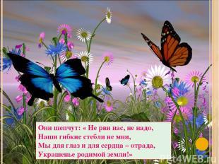 Они шепчут: « Не рви нас, не надо, Наши гибкие стебли не мни, Мы для глаз и для