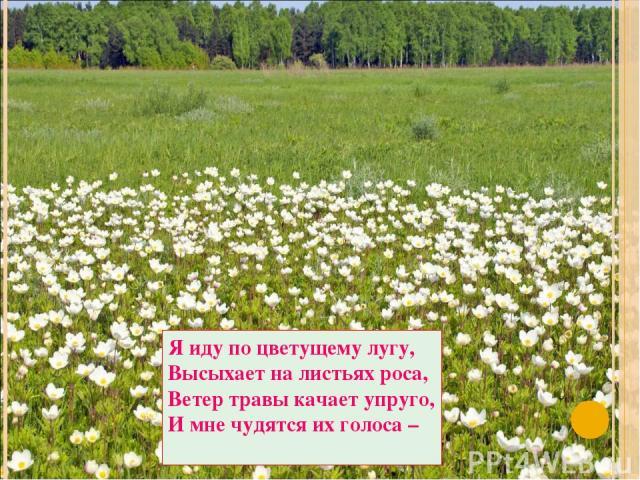 Я иду по цветущему лугу, Высыхает на листьях роса, Ветер травы качает упруго, И мне чудятся их голоса –