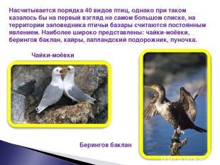Насчитывается порядка 40 видов птиц, однако при таком казалось бы на первый взгл