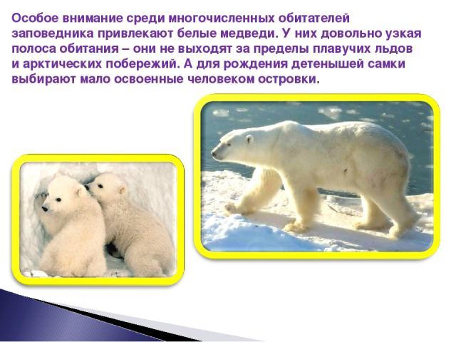 Особое внимание среди многочисленных обитателей заповедника привлекают белые медведи. У них довольно узкая полоса обитания – они не выходят за пределы плавучих льдов и арктических побережий. А для рождения детенышей самки выбирают мало освоенные чел…