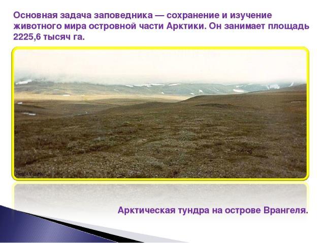 Основная задача заповедника — сохранение и изучение животного мира островной части Арктики. Он занимает площадь 2225,6 тысяч га. Арктическая тундра на острове Врангеля.
