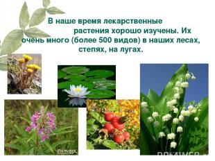 В наше время лекарственные растения хорошо изучены. Их очень много (более 500 ви