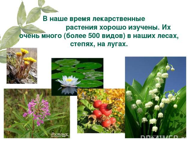 В наше время лекарственные растения хорошо изучены. Их очень много (более 500 видов) в наших лесах, степях, на лугах.