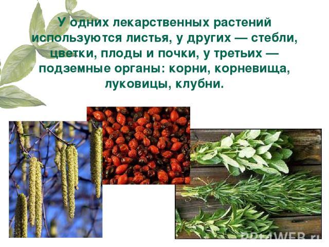 У одних лекарственных растений используются листья, у других — стебли, цветки, плоды и почки, у третьих — подземные органы: корни, корневища, луковицы, клубни.