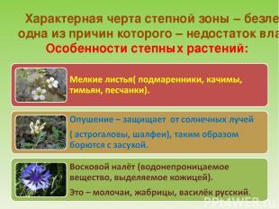 Характерная черта степной зоны – безлесье, одна из причин которого – недостаток