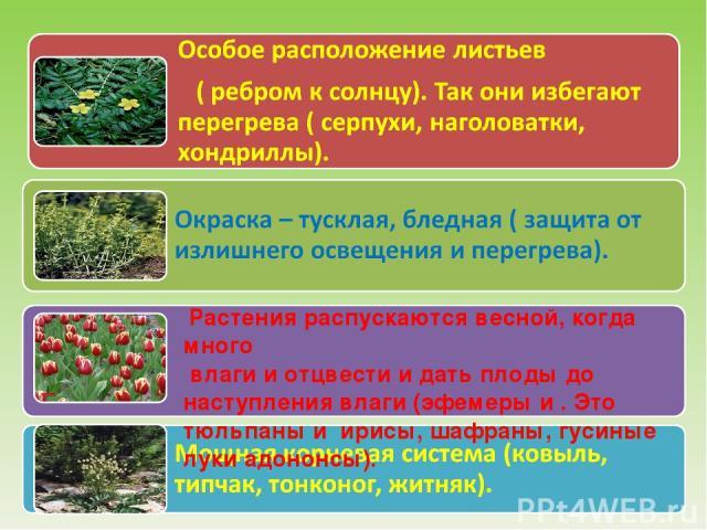 Растения распускаются весной, когда много влаги и отцвести и дать плоды до наступления влаги (эфемеры и . Это тюльпаны и ирисы, шафраны, гусиные луки адононсы).