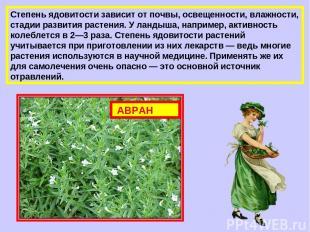 Степень ядовитости зависит от почвы, освещенности, влажности, стадии развития ра