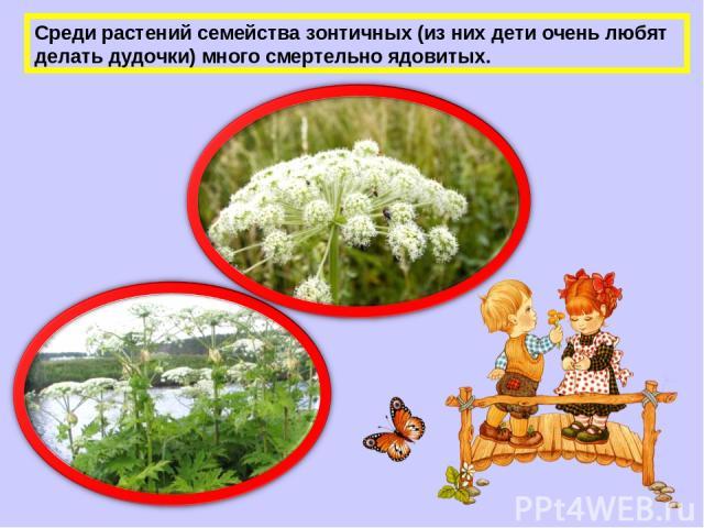 Среди растений семейства зонтичных (из них дети очень любят делать дудочки) много смертельно ядовитых.