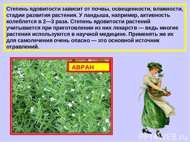 Степень ядовитости зависит от почвы, освещенности, влажности, стадии развития растения. У ландыша, например, активность колеблется в 2—3 раза. Степень ядовитости растений учитывается при приготовлении из них лекарств — ведь многие растения использую…