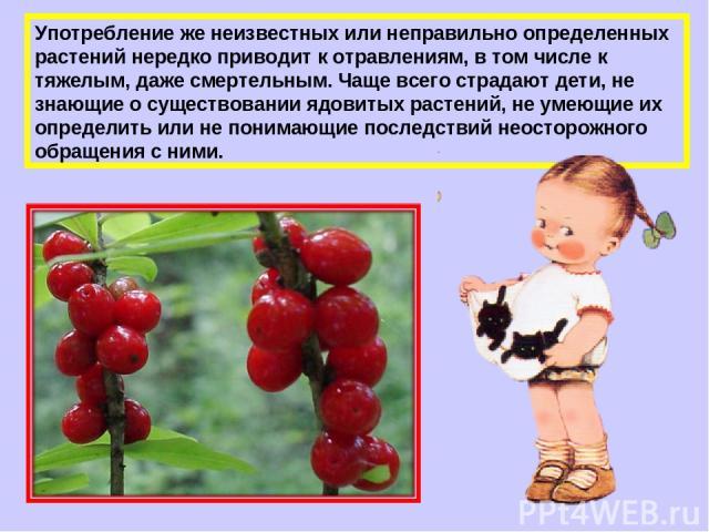 Употребление же неизвестных или неправильно определенных растений нередко приводит к отравлениям, в том числе к тяжелым, даже смертельным. Чаще всего страдают дети, не знающие о существовании ядовитых растений, не умеющие их определить или не понима…