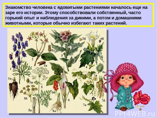 Знакомство человека с ядовитыми растениями началось еще на заре его истории. Этому способствовали собственный, часто горький опыт и наблюдения за дикими, а потом и домашними животными, которые обычно избегают таких растений.