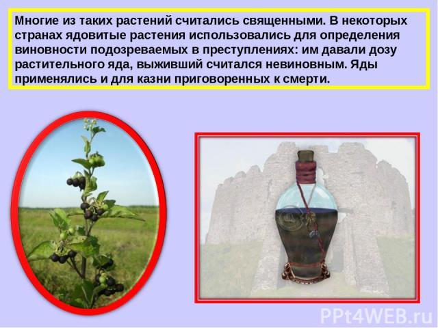 Многие из таких растений считались священными. В некоторых странах ядовитые растения использовались для определения виновности подозреваемых в преступлениях: им давали дозу растительного яда, выживший считался невиновным. Яды применялись и для казни…