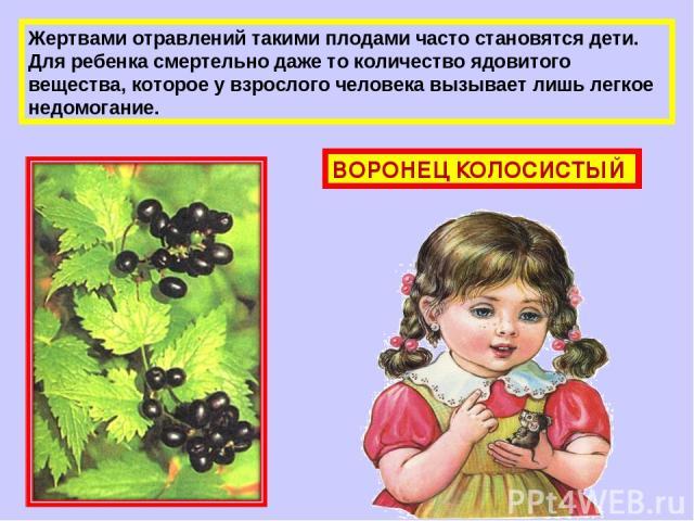 Жертвами отравлений такими плодами часто становятся дети. Для ребенка смертельно даже то количество ядовитого вещества, которое у взрослого человека вызывает лишь легкое недомогание. ВОРОНЕЦ КОЛОСИСТЫЙ