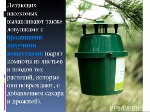 Летающих насекомых вылавливают также ловушками с бродящими пахучими веществами (