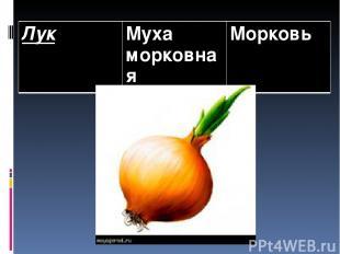 Лук Муха морковная Морковь