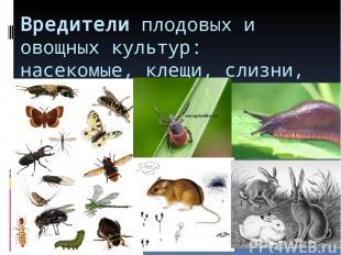 Вредители плодовых и овощных культур: насекомые, клещи, слизни, грызуны.