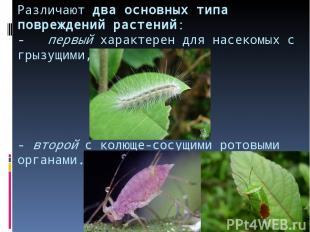Различают два основных типа повреждений растений: - первый характерен для насеко