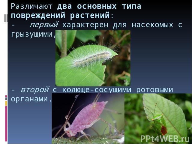 Различают два основных типа повреждений растений: - первый характерен для насекомых с грызущими, - второй с колюще-сосущими ротовыми органами.