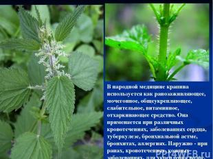 В народной медицине крапива используется как ранозаживляющее, мочегонное, общеук