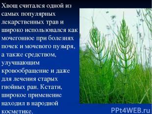 Хвощ считался одной из самых популярных лекарственных трав и широко использовалс