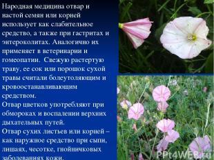 Народная медицина отвар и настой семян или корней использует как слабительное ср