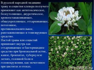 В русской народной медицине траву и соцветия клевера ползучего применяют как ант