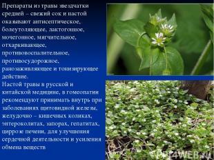 Препараты из травы звездчатки средней – свежий сок и настой оказывают антисептич