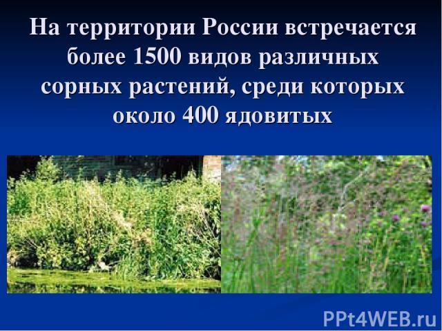 Натерритории России встречается более 1500 видов различных сорных растений, среди которых около 400ядовитых