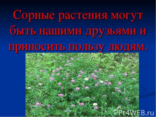 Сорные растения могут быть нашими друзьями и приносить пользу людям.