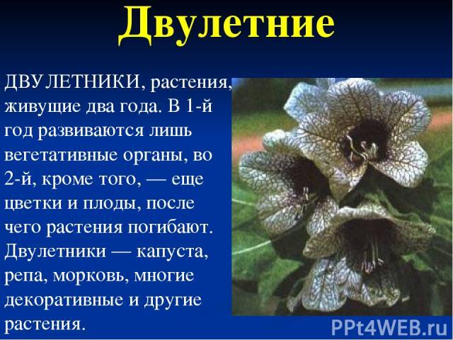 Двулетние ДВУЛЕТНИКИ, растения, живущие два года. В 1-й год развиваются лишь вегетативные органы, во 2-й, кроме того, — еще цветки и плоды, после чего растения погибают. Двулетники — капуста, репа, морковь, многие декоративные и другие растения.