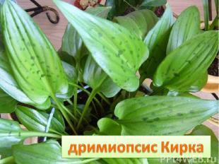 У луковицы дочки – Стреловидные листочки, Все они в веснушках И похожи летом на