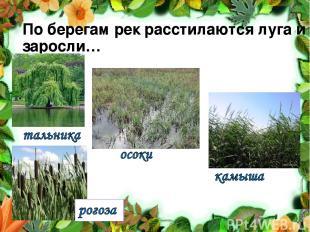 По берегам рек расстилаются луга и заросли…