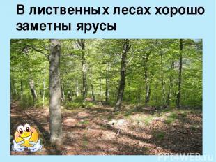 В лиственных лесах хорошо заметны ярусы растительности.