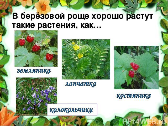 В берёзовой роще хорошо растут такие растения, как…