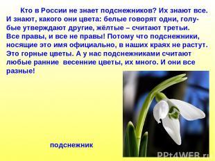 Кто в России не знает подснежников? Их знают все. И знают, какого они цвета: бел