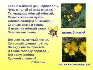 Если в майский день пришёл ты, Чуть с полей сбежал снежок, - Ты увидишь жёлтый-ж