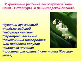 Охраняемые растения лесопарковой зоны Санкт - Петербурга и Ленинградской области