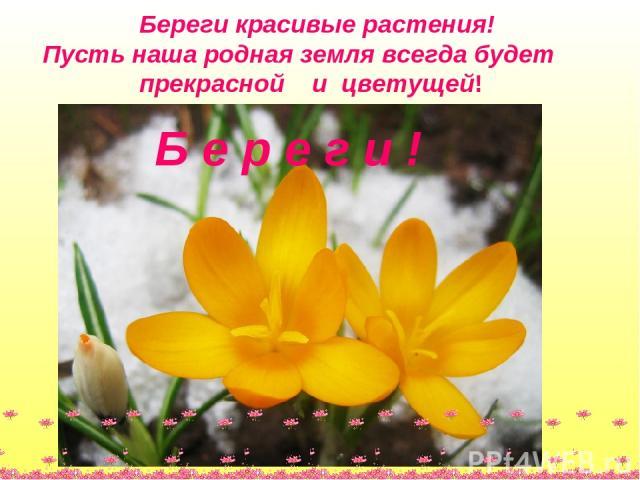 Береги красивые растения! Пусть наша родная земля всегда будет прекрасной и цветущей! Б е р е г и !